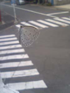蝶もひとやすみ
