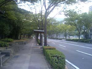 早朝の中央公園